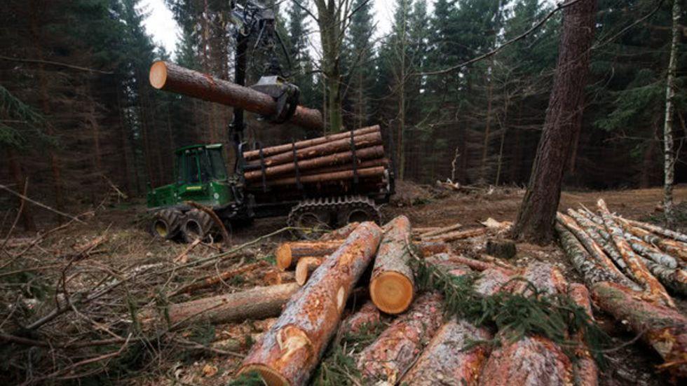 Baumstämme in einem sächsischen Wald (Archivfoto)