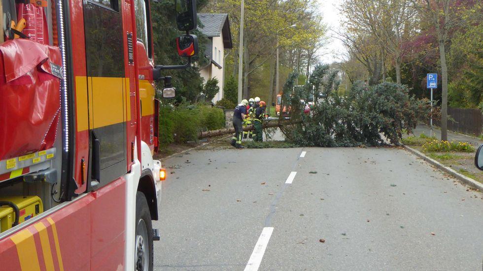 Der Baum war von einem privaten Grundstück auf die Straße gefallen.