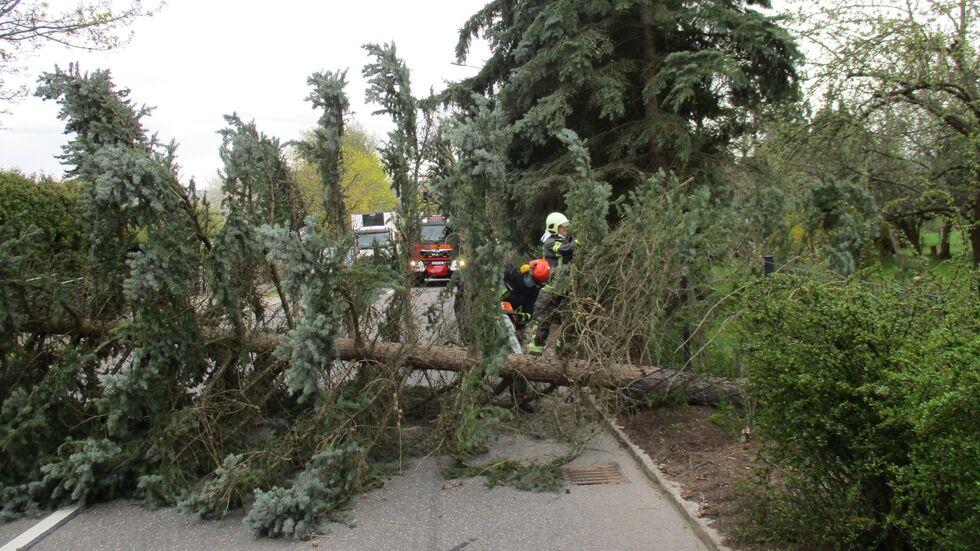 Der Baum krachte von einem privaten Grundstück auf die Marienthaler Straße.